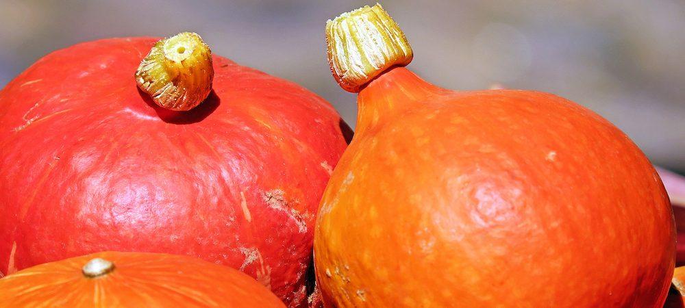 pumpkin-1595644_1920